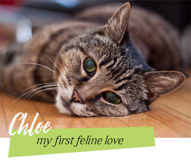 Chloedizzle - my first feline love
